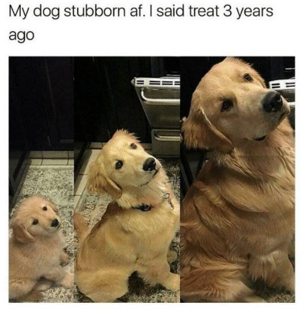 Nothing Will Ever Stop Them From Being Stubborn