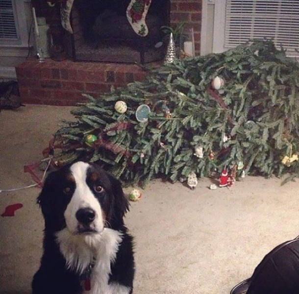 Cats And Dogs Hate Christmas Decorations Animals