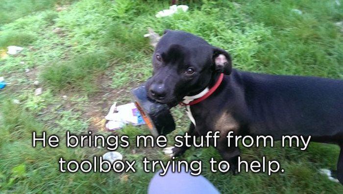 Pets Bring Gifts