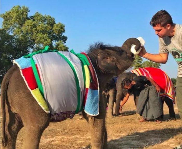 Orphan Elephants Get Homemade Blankets During Myanmar Cold Snap