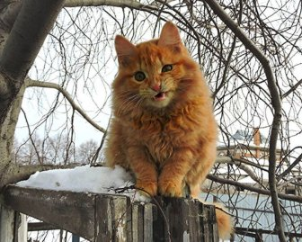Siberian Farm Cats Have Absolutely Taken Over One Farmer's Land
