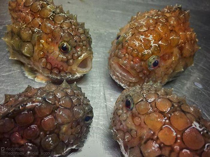 Strange Underwater Creatures