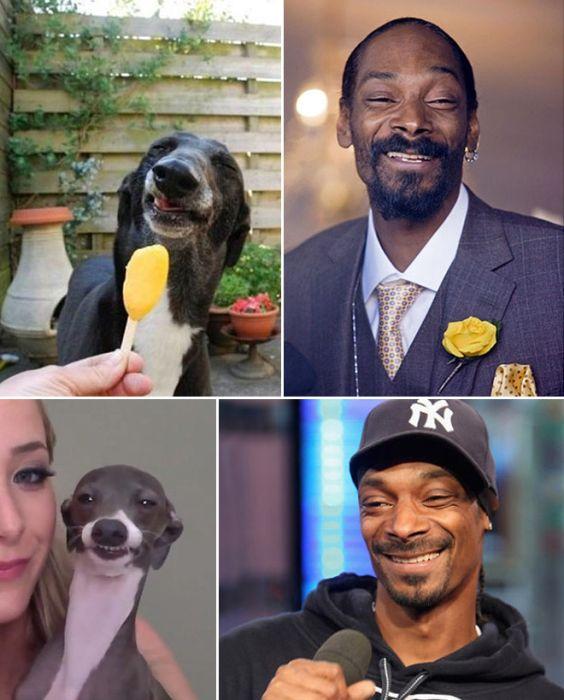 Celebrity Animal Lookalikes