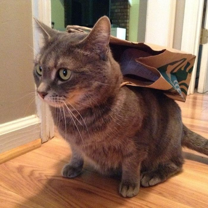 Cats Wearing Capes