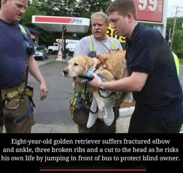 These Dogs Are Heroes