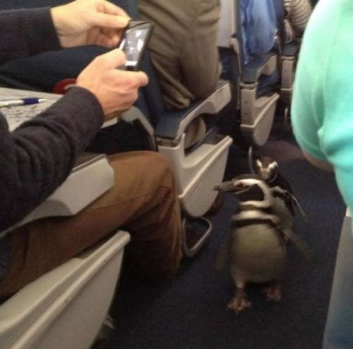 Animals On The Planes