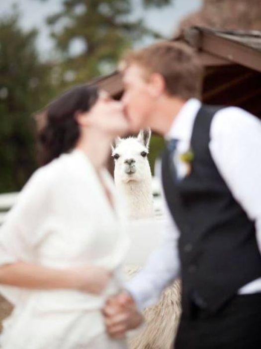 When Animals Spoil Photos