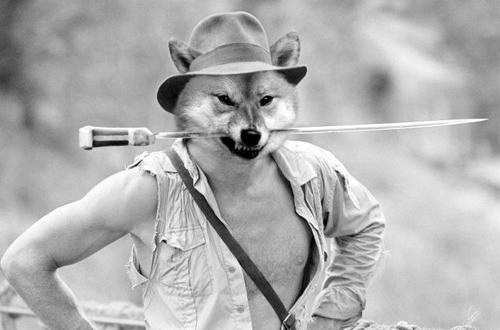 Guy Photoshops His Shiba Inu Into Famous Photos