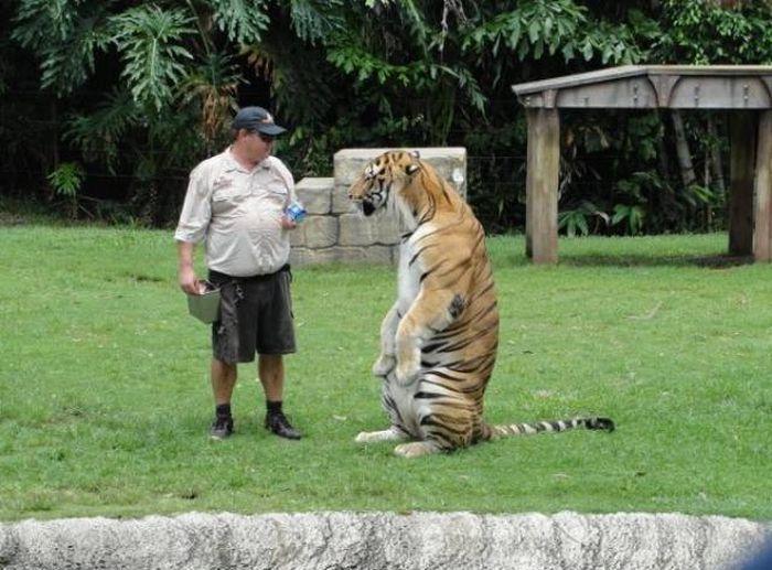 Standing Animals