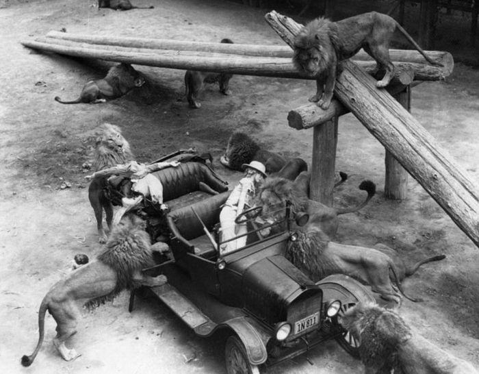 Vintage Photos Of The LA Lion Farm