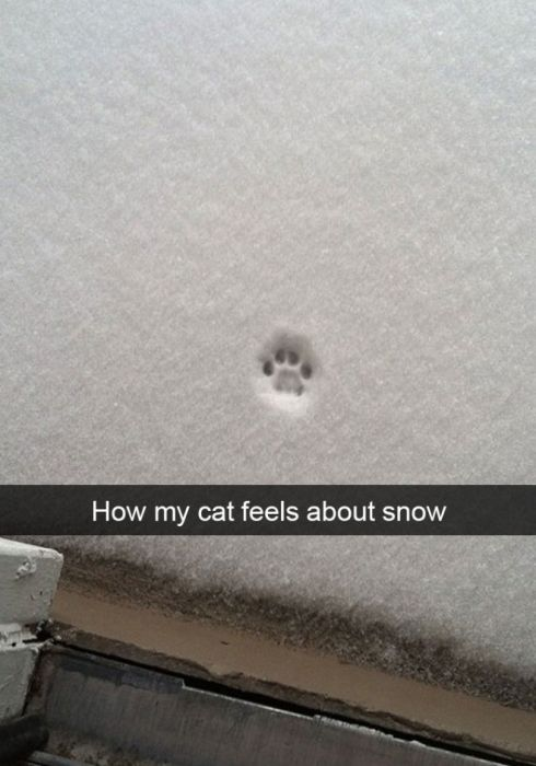Cats Reacting To The First Snow