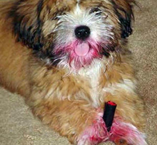 Dogs  Vs Makeup