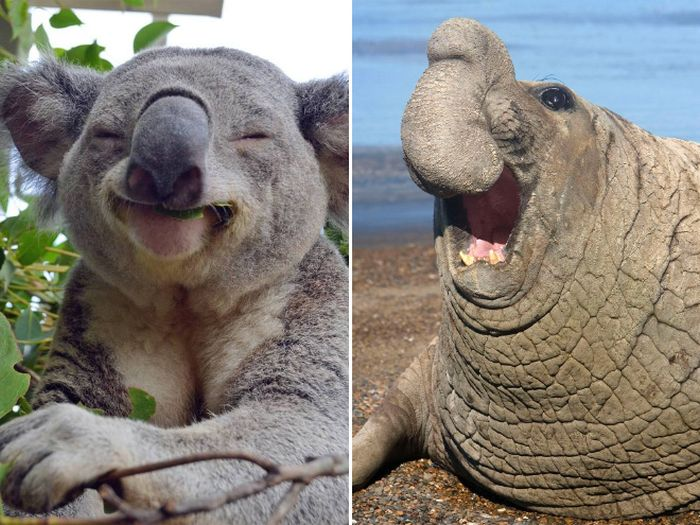 Laughing Animals