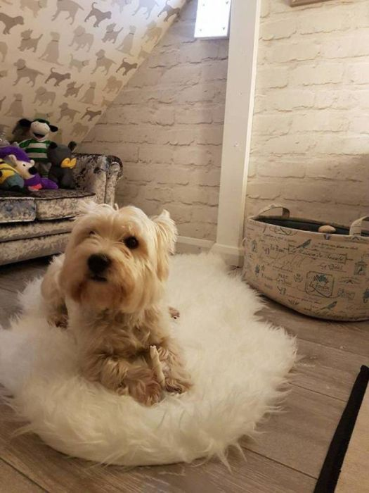 Dog Gets A New Room Just Because A Child Is Born In The Family