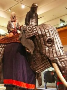 Elephant Body Armor