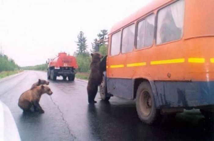 Only In Russia, part 19
