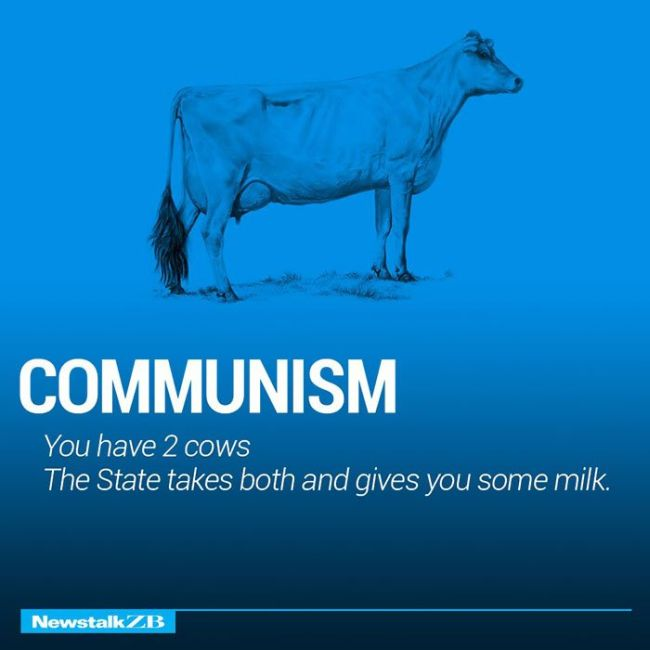 Cows Explain Economics