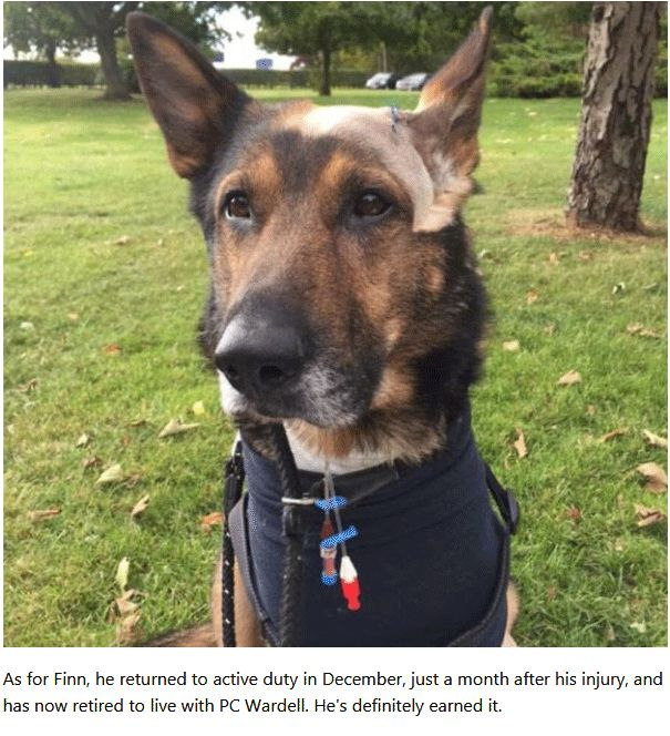Police Dog Refused To Let Go Even A Violent Thug Plunged A 10-Inch Blade Into His Belly