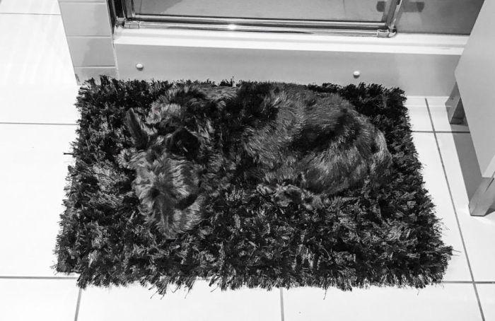 Hidden Pets