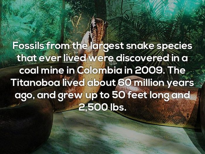 Interesting Facts, part 25