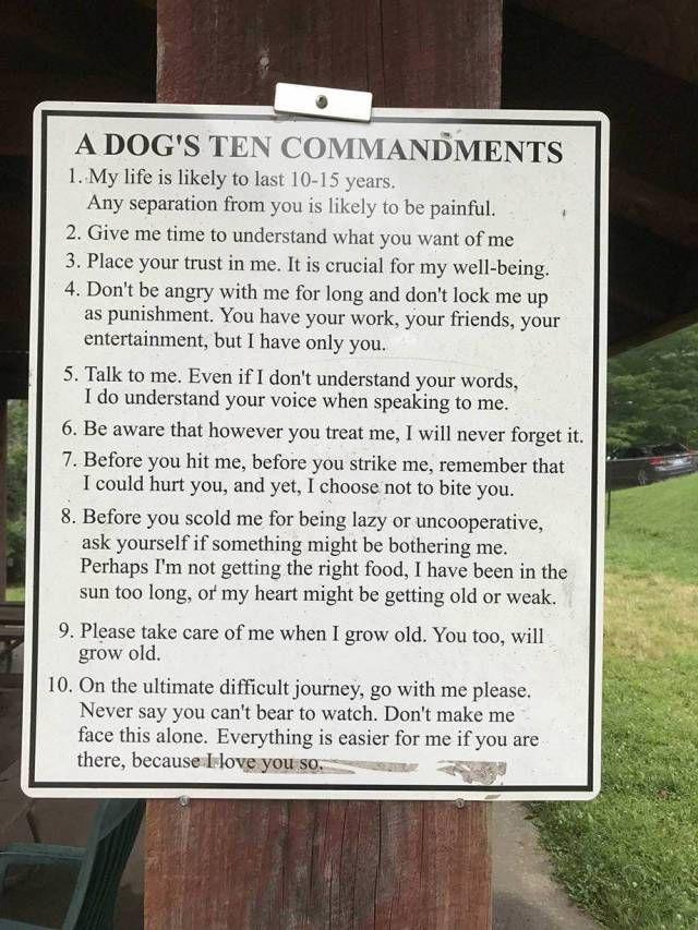 A Dog's Ten Commandments