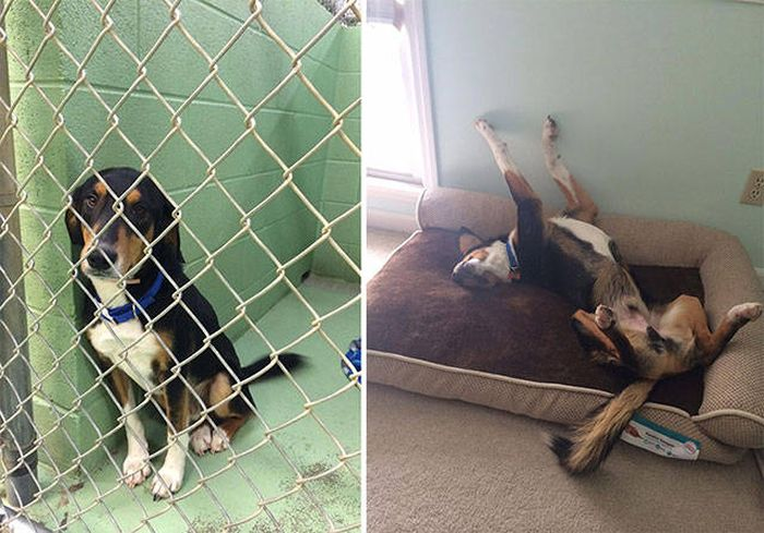 Dogs Before And After Adoption