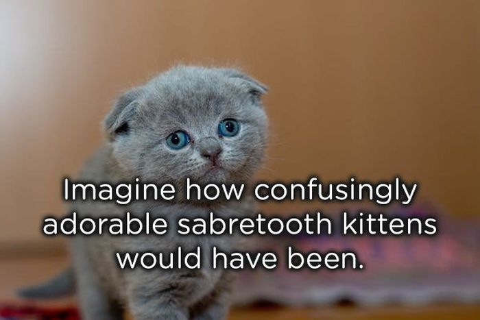 Shower Thoughts, part 17