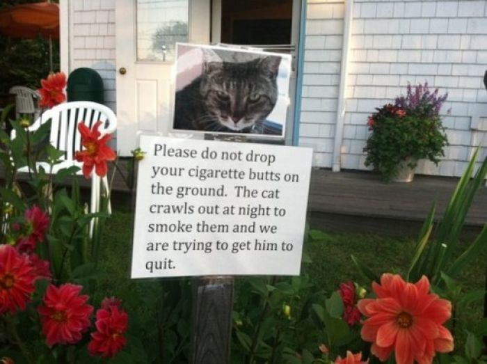 Funny Street Posters