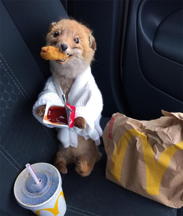 This Woman Takes Her Taxidermy Fox Everywhere She Goes
