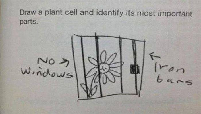 Funny Homeworks