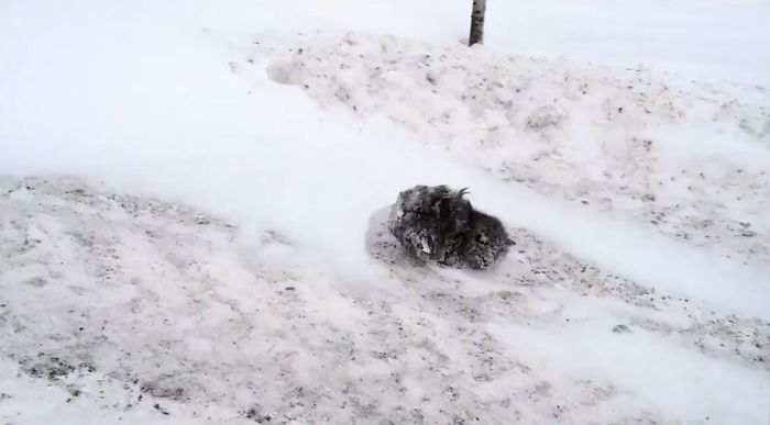 Man Stops His Car To Save A Frozen Cat