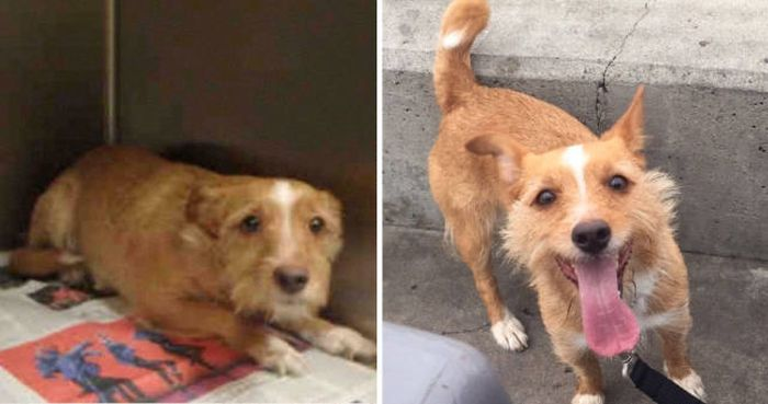 Dogs Before And After An Adoption