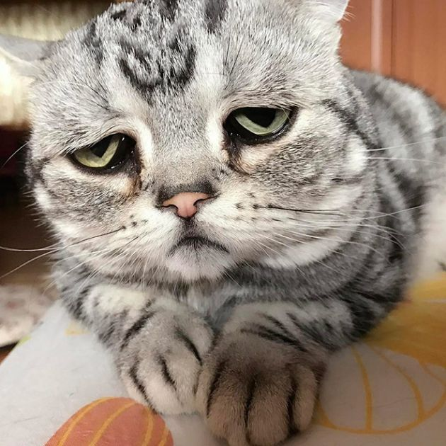 Luhu IsThe Saddest Cat In The World
