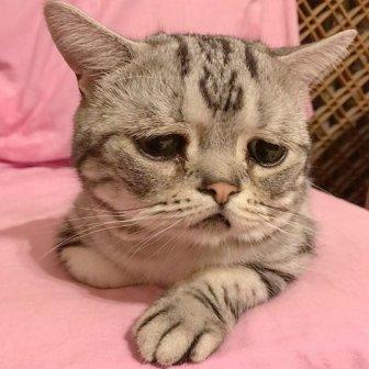 Luhu IsThe Saddest Cat In The World