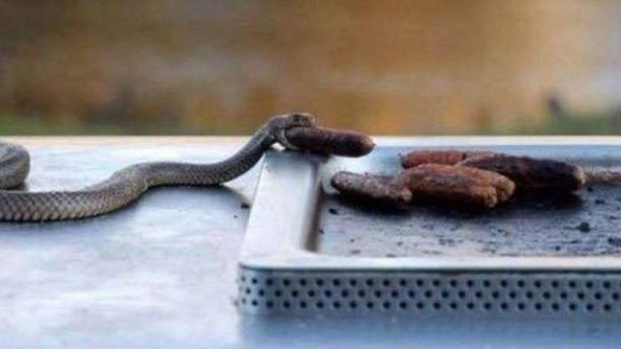 Snakes In Australia