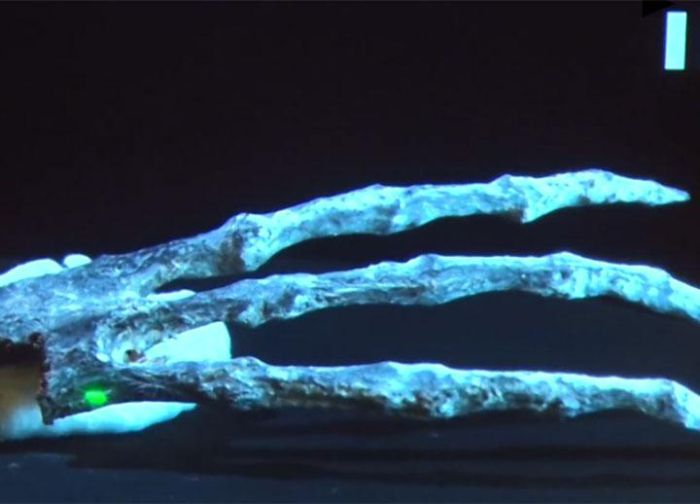 Three-Fingered Skeleton Found in Peru Is Not Human