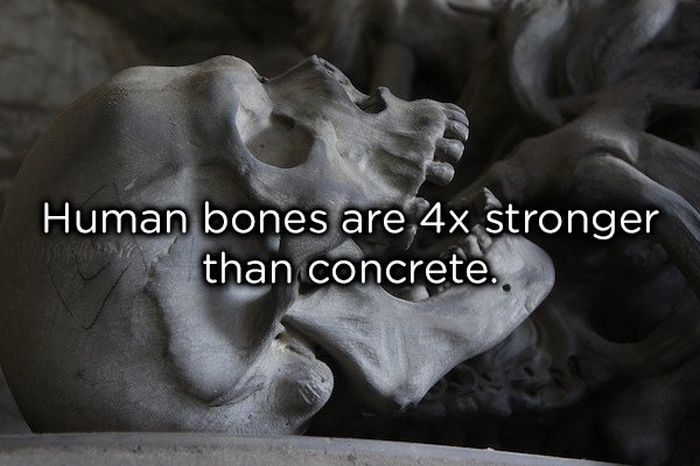 Facts About The Human Body, part 2