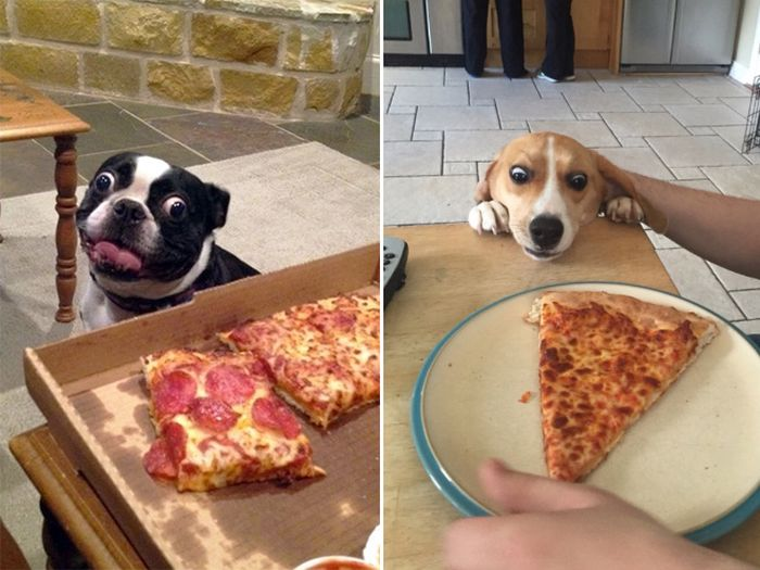When Dogs Look At Food It's Hilarious