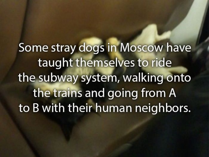 Interesting Stories About Dogs