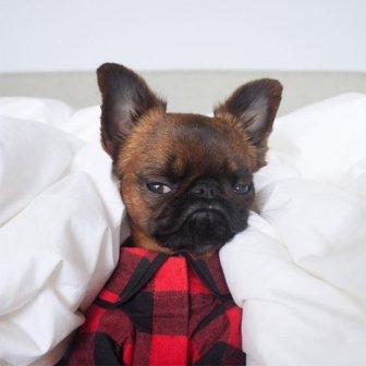 Grumpy Dog Gizmo