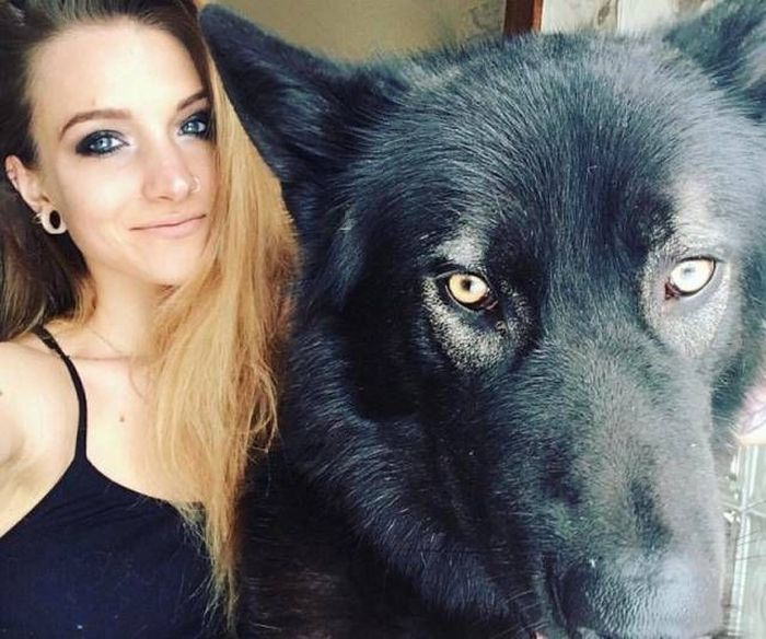 Wolf-Dog Hybrids