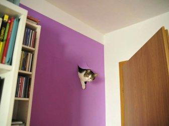 Cats Are Fun