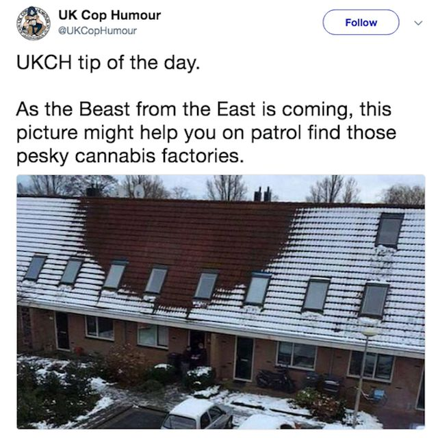 Funny Cops