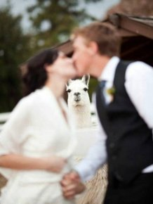 Funny And Unusual Wedding Photos
