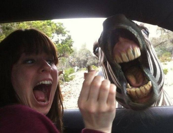 Perfect Timed Photos, part 2