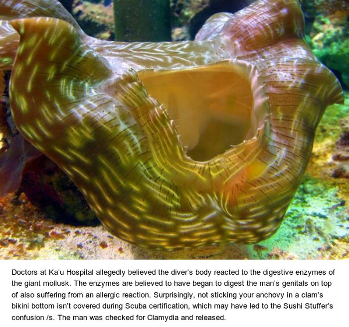 Scuba Diver tries To Have Sex With Giant Clam And Gets Hospitalized