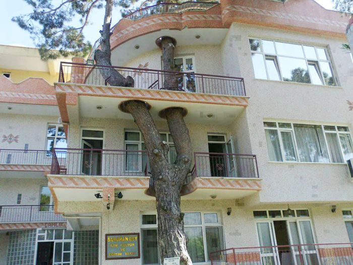 When Architects Didn't Want To Cut Down Trees