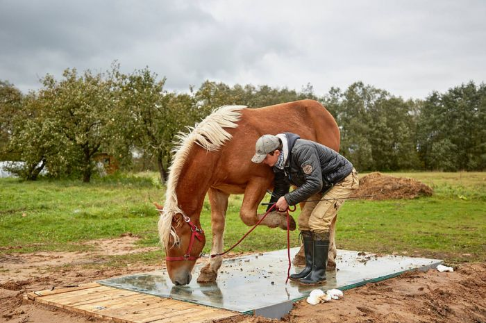 How To Make An Unusual Photo Of A Horse