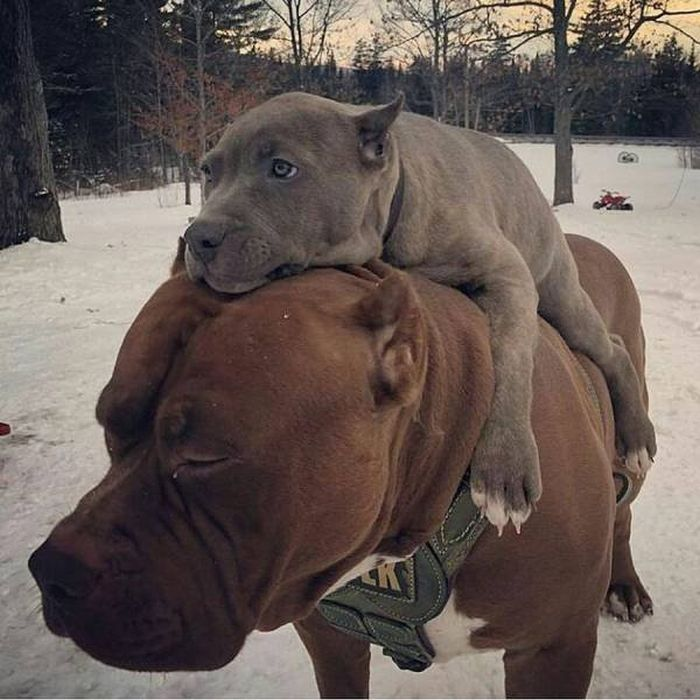 Very Cool Animals