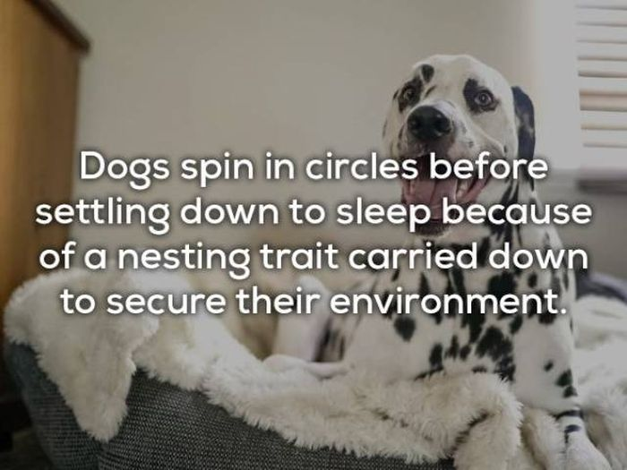 Facts About Dogs